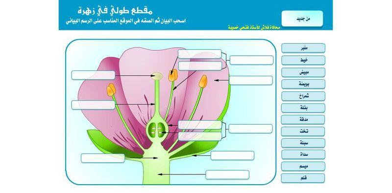 دراسة أجزاء الزهرة Anatomie Et Biologie En Flash Science Projects Projects Map