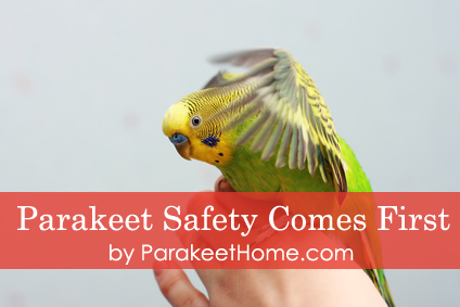 Parakeet Care – Expert Guide to Keep Your Parakeet Healthy