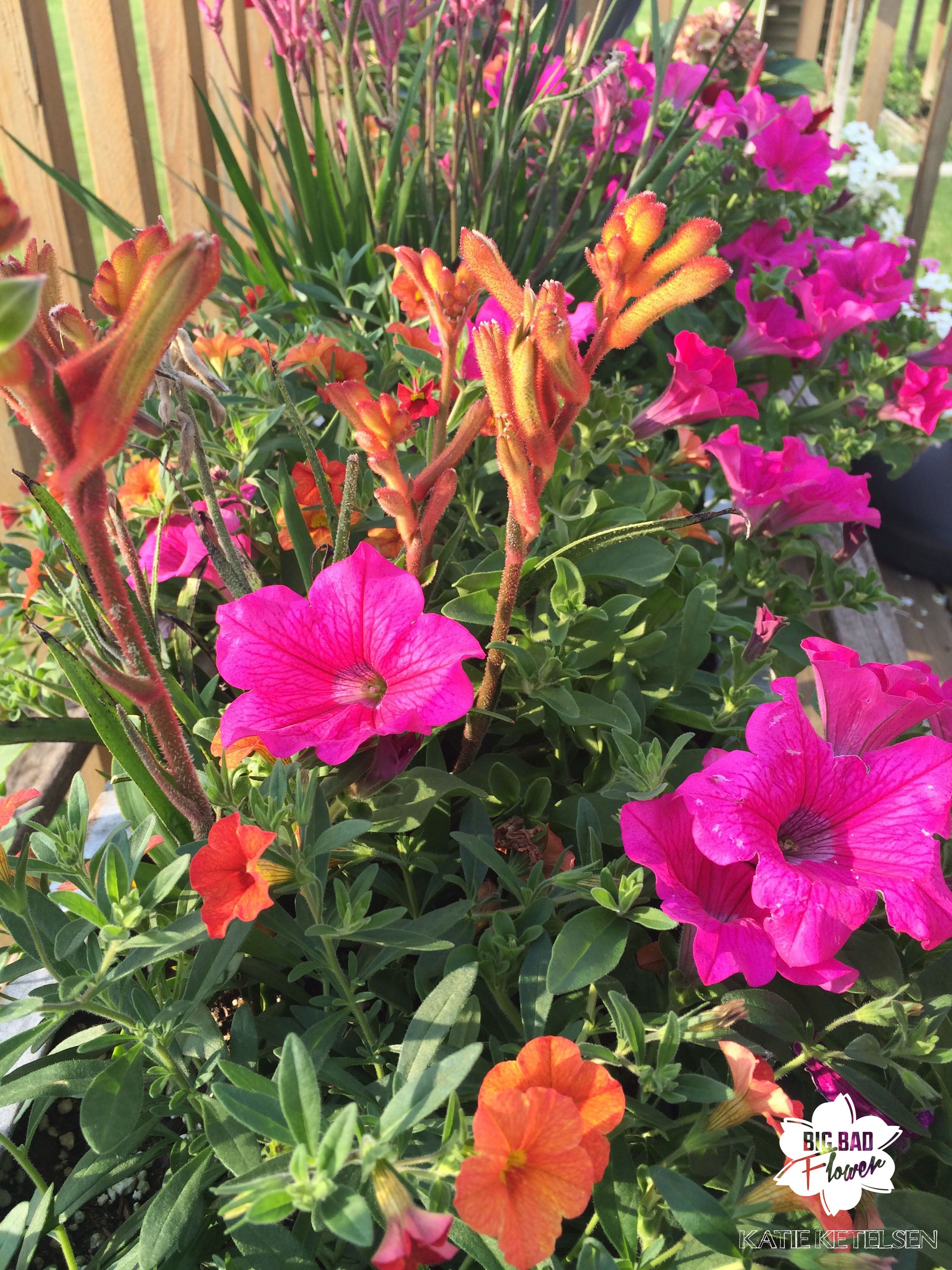 Container Garden Combo With Surfinia Petunias Million Bells