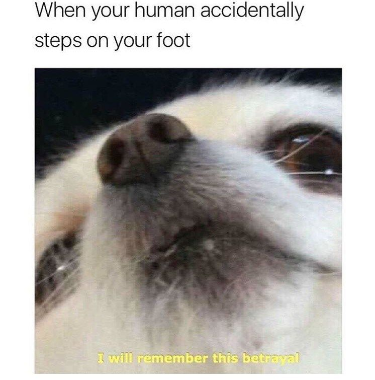 30 Doggo Memes That Will Leave You Feeling Warm And Fuzzy
