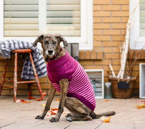 Bailey Bella Striped Sweater Food Animals Pet Store Pets