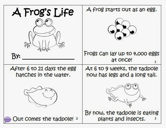 Frog Life Cycle Or Have Kids Label Draw The Life Cycle