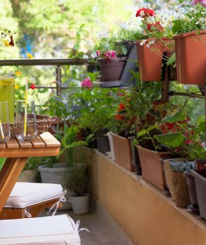 8 Astuces Pour Cacher Un Vis A Vis Jardins