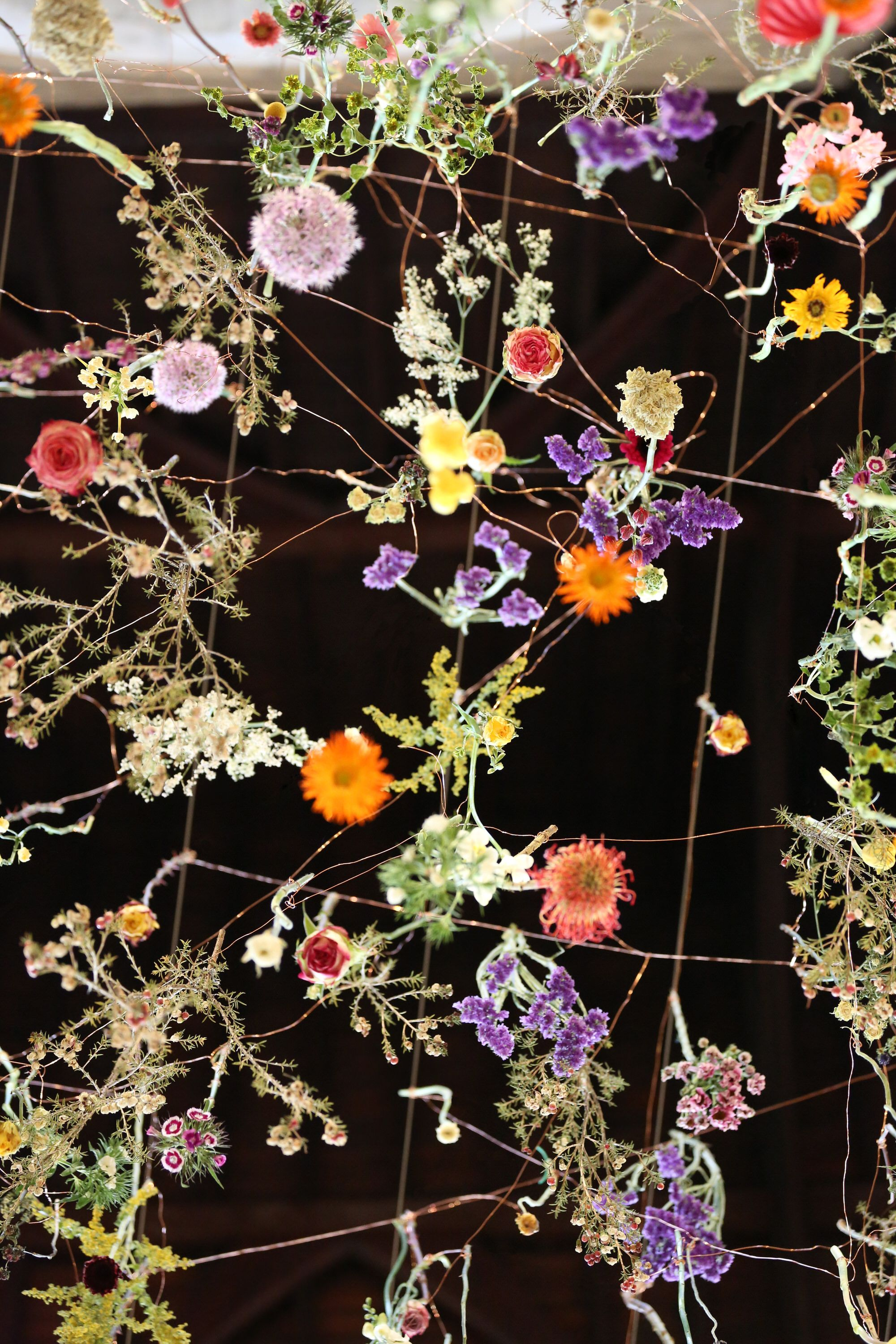 The Flower Garden Display'd - Rebecca Louise Law - Rebecca Louise Law
