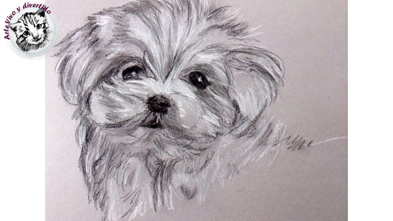 Resultado de imagen de pintar perros acuarela bichon maltes ...