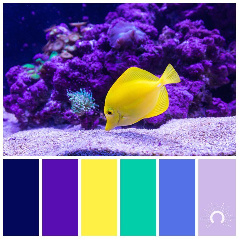 Wandfarben Farbpalette Gelb: Color Palette, Color Combination, Farbpalette, Hue, Blue
