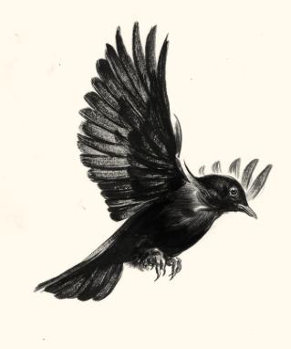 Blackbird Take These Broken Wings And Learn To Fly Tatuaje De Cuervo Pinturas De Animales Nuevos Tatuajes