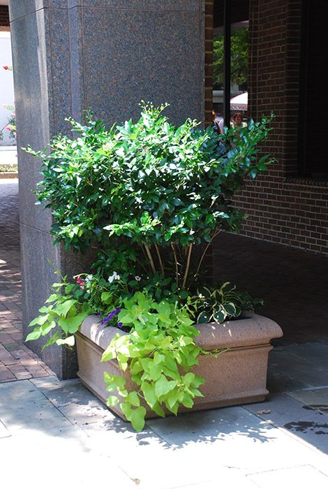 Enhance Your Outside Image With Exterior Plants From Interior Plantscapes  LLC.