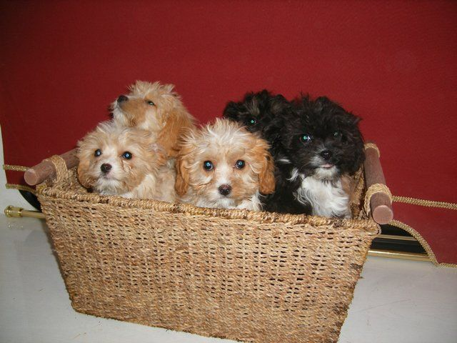 Preloved Dogs Puppies For Sale Uk And Ireland