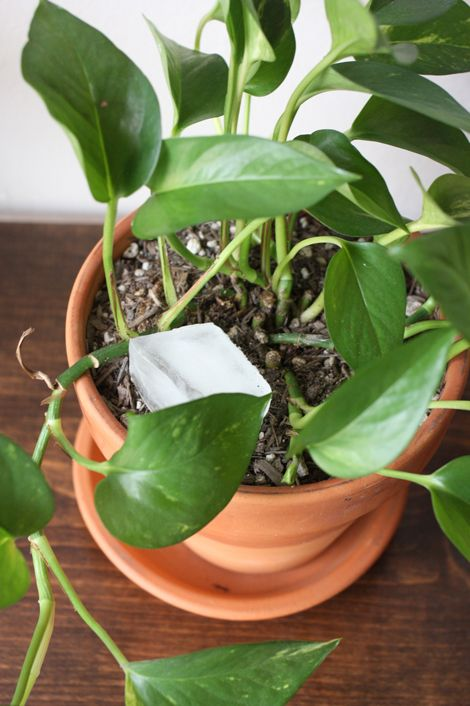 A Simple But Life Changing Indoor Plant Tip Indoor Plants
