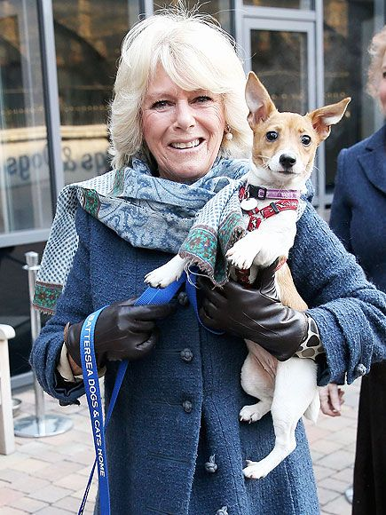 Camilla Duchess Of Cornwall Shows Off Rescue Pup On National Dog Day Camilla Duchess Of Cornwall Jack Russell Duchess Of Cornwall