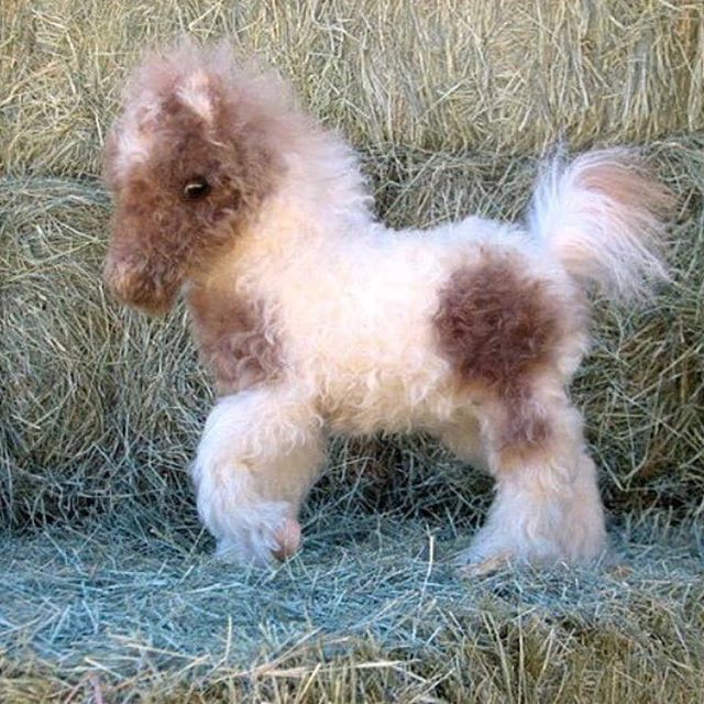 Fluffy baby horse | Equines | Cute baby animals, Cute ...