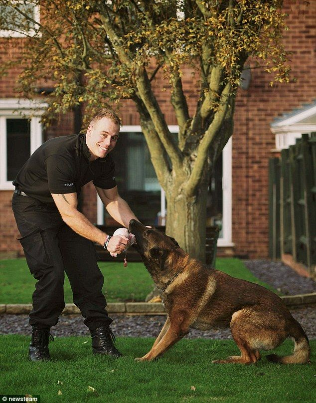 Meet The Police Dog With A Real Taste For Criminals Janus Has