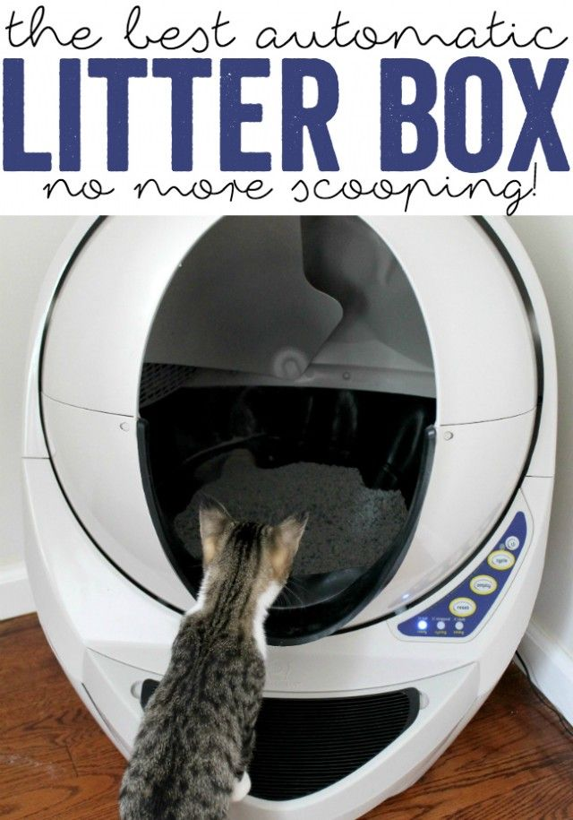 Litter Robot Litter Robot Self Cleaning Litter Box