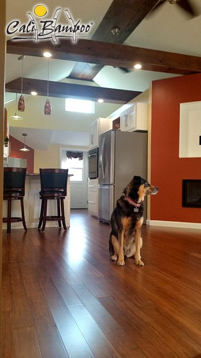 Pet Friendly Bamboo Flooring Flooring Bamboo Flooring Pet