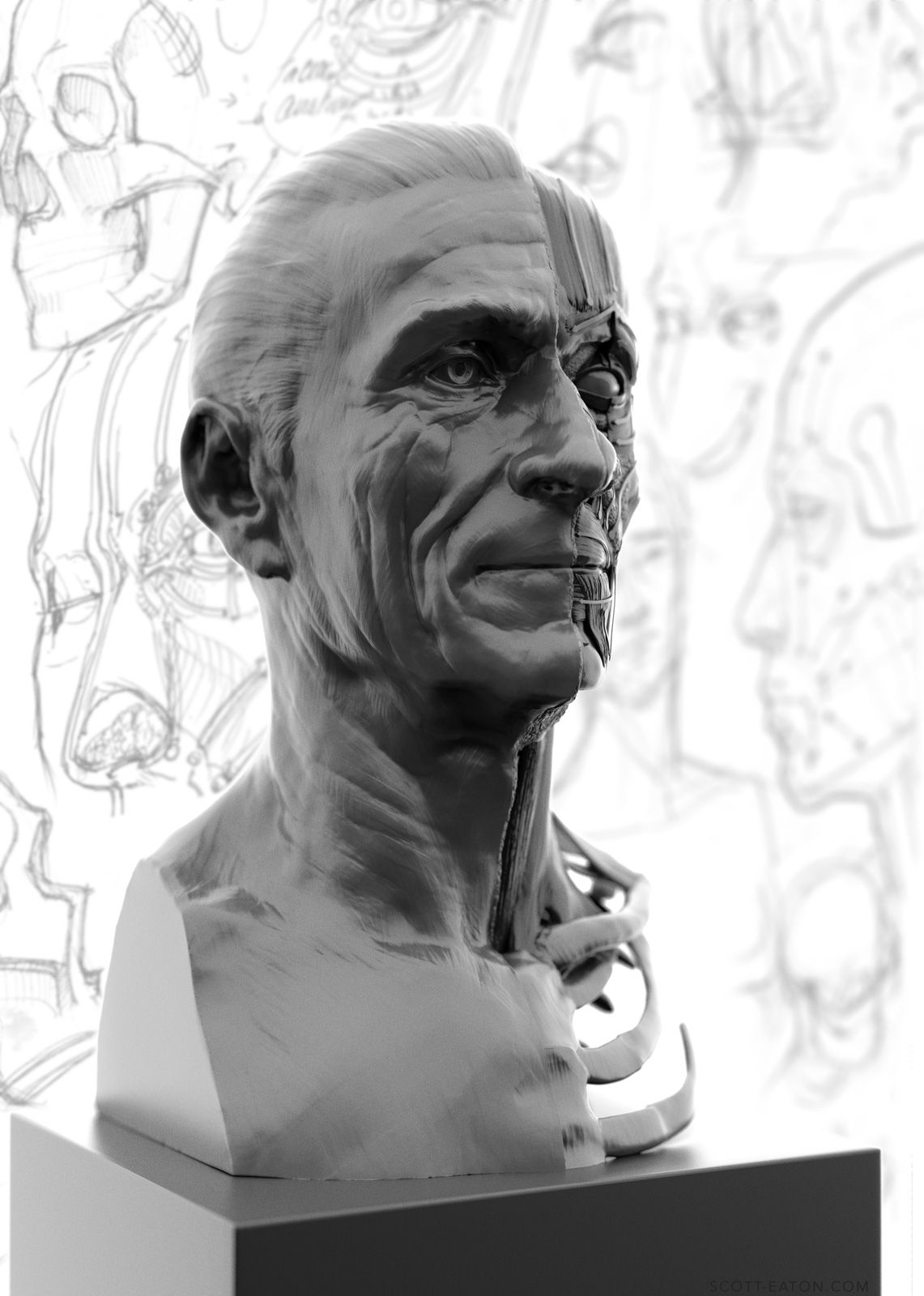 Portrait Side Of The Ecorche Study Relates The Underlying Facial