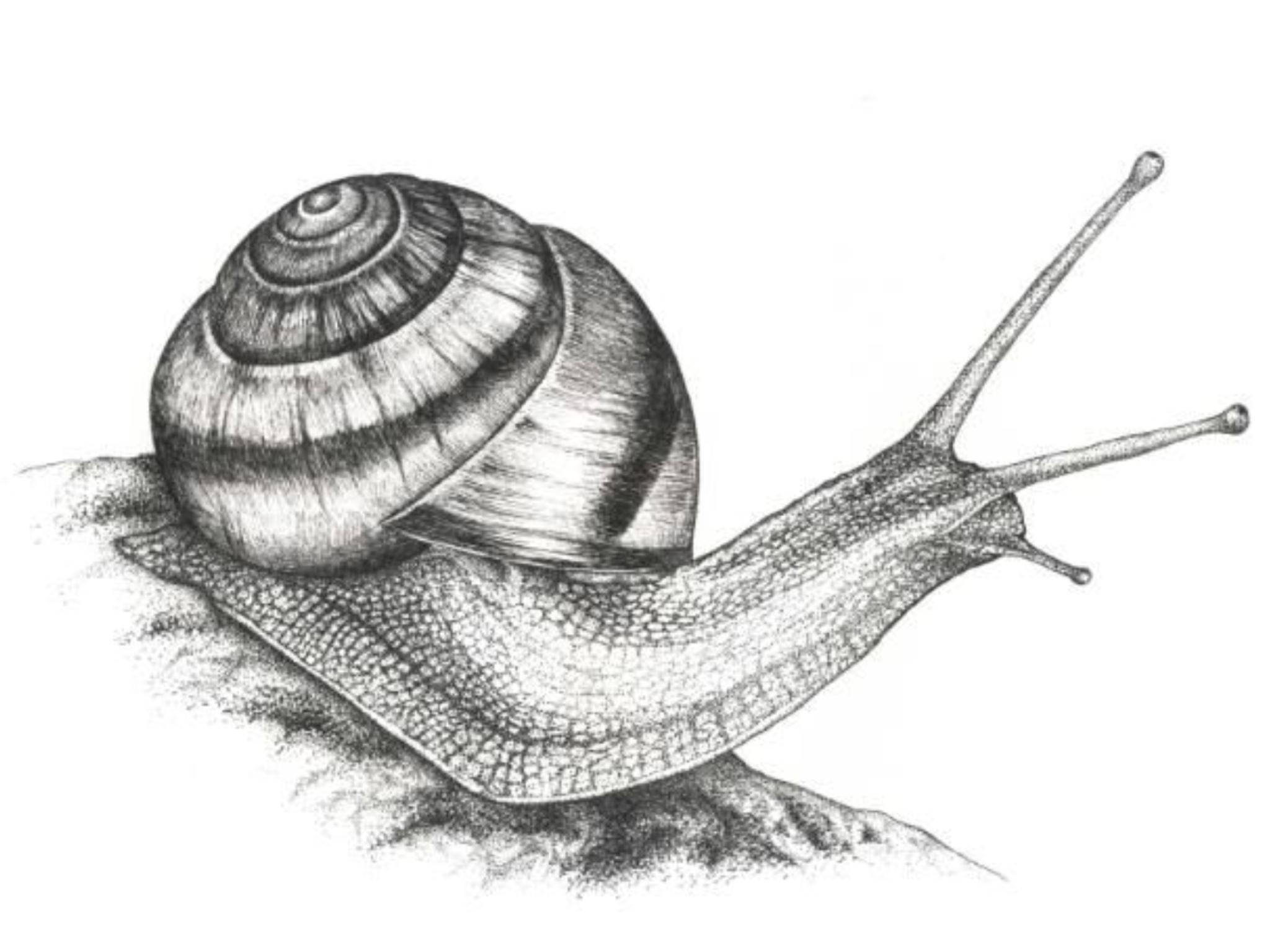 """Résultat de recherche d'images pour """"caracol draw"""""""
