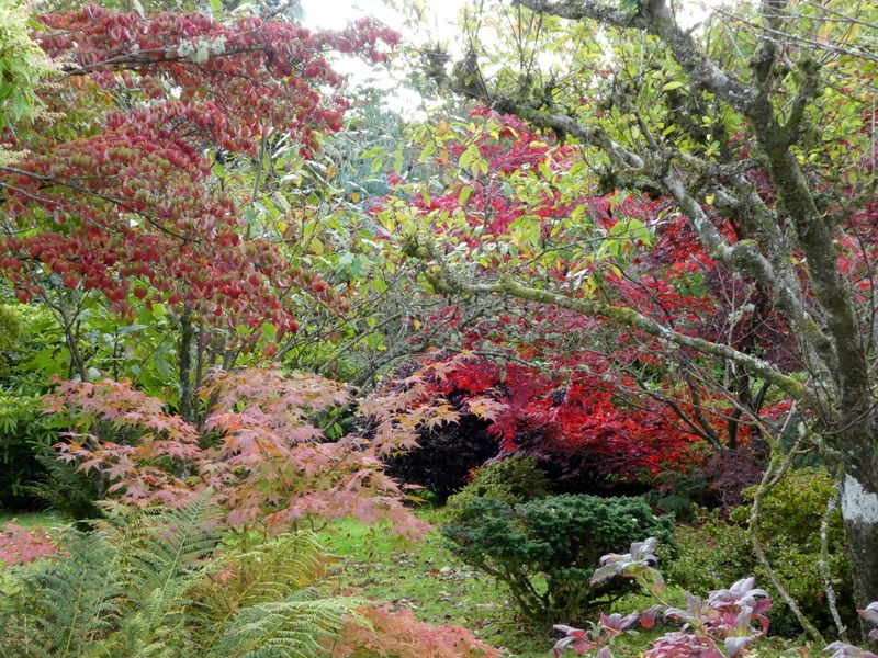 October colours on the bottom terrace of Barr Farm garden
