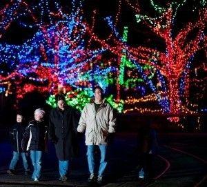 Christmas At The Zoo Christmas At The Zoo Kids Events Zoo
