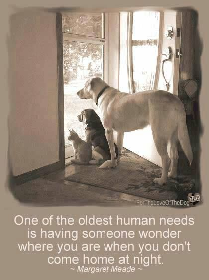 So sweet! Reminds of the Minnie Driver movie where the dog waits...makes me cry every time!!