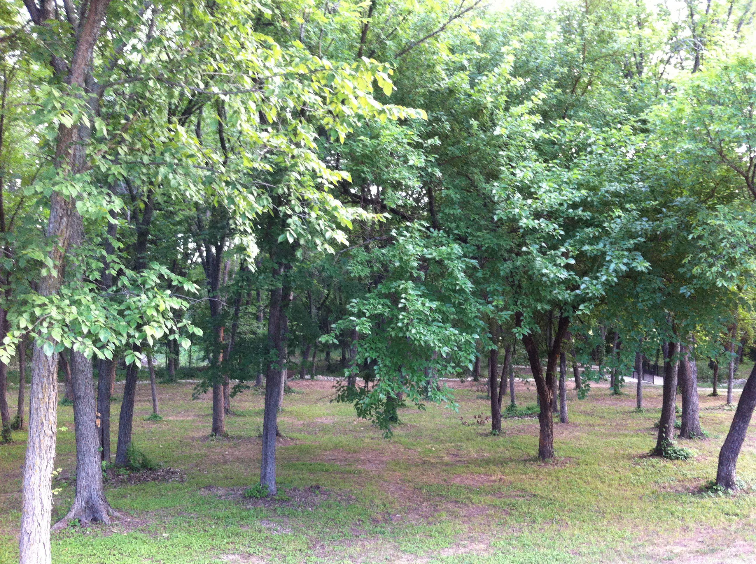 Sonora Park Forest Park Forest Landscape Plants