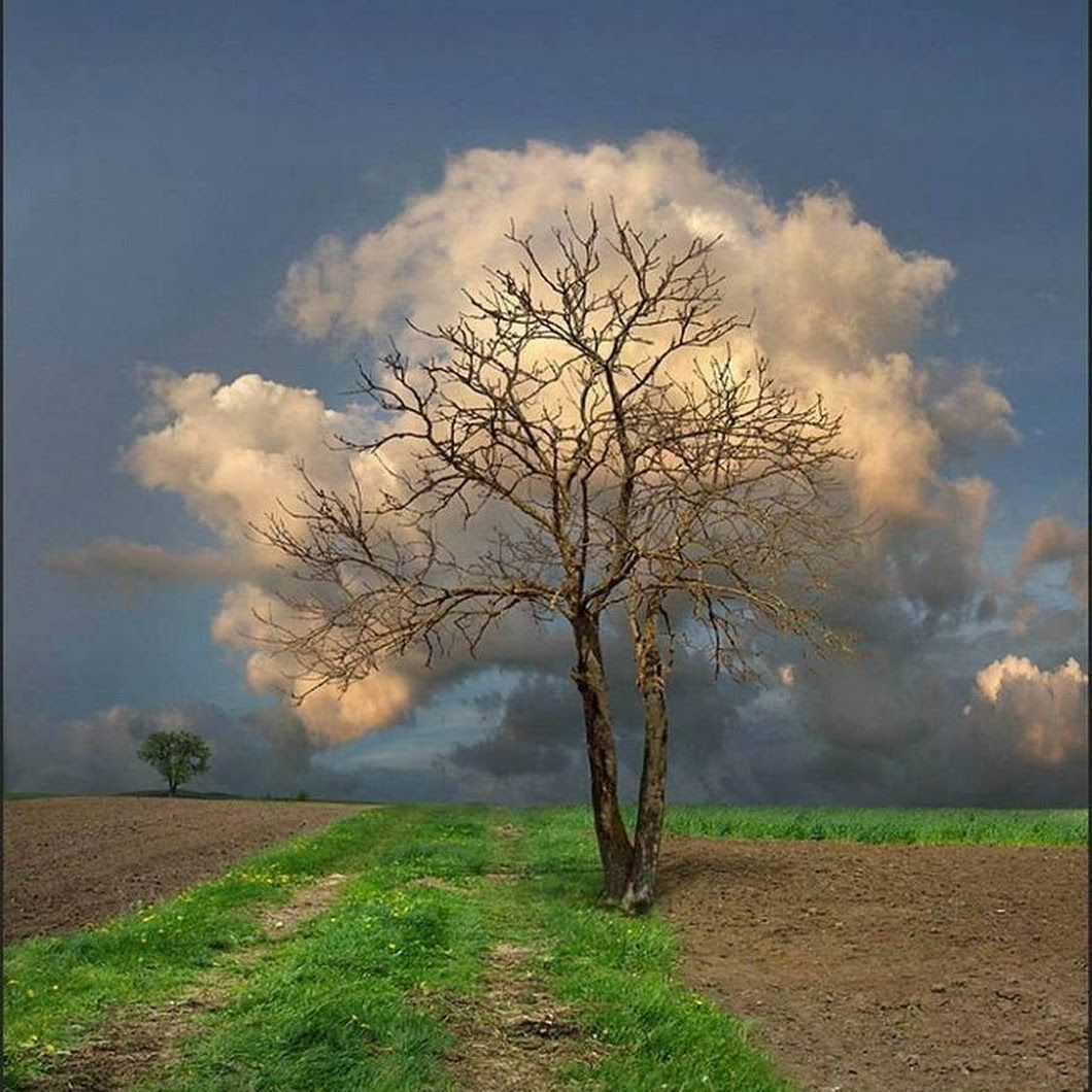 Cloud Leaves On Tree Landscape Trees Unusual Pictures Nature