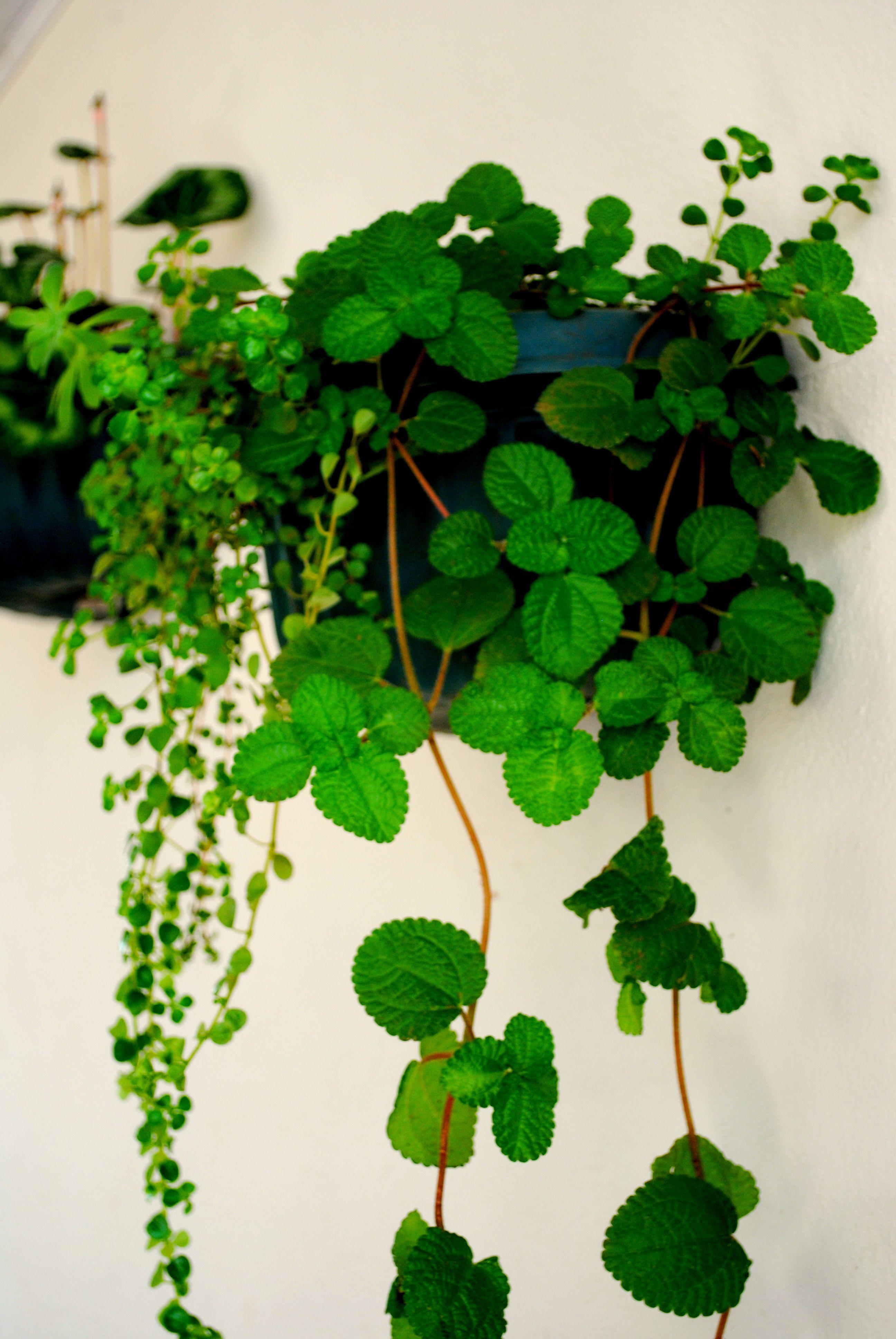 Decoraciones en las paredes para diferentes tipos de - Plantas colgantes interior ...