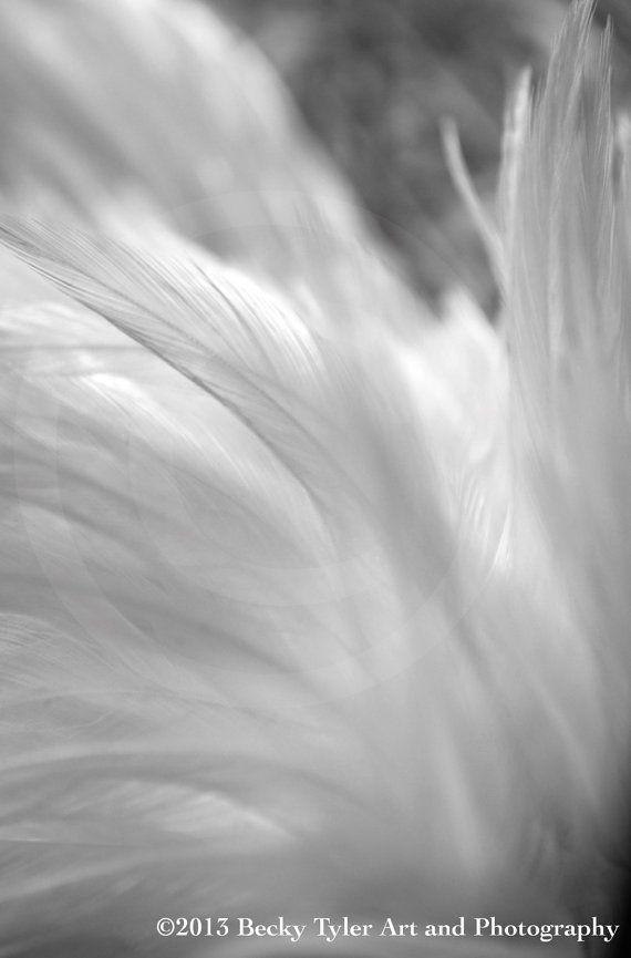 White Chicken Feathers Rustic Fine Art Photo by BeckyTylerArt, $20.00
