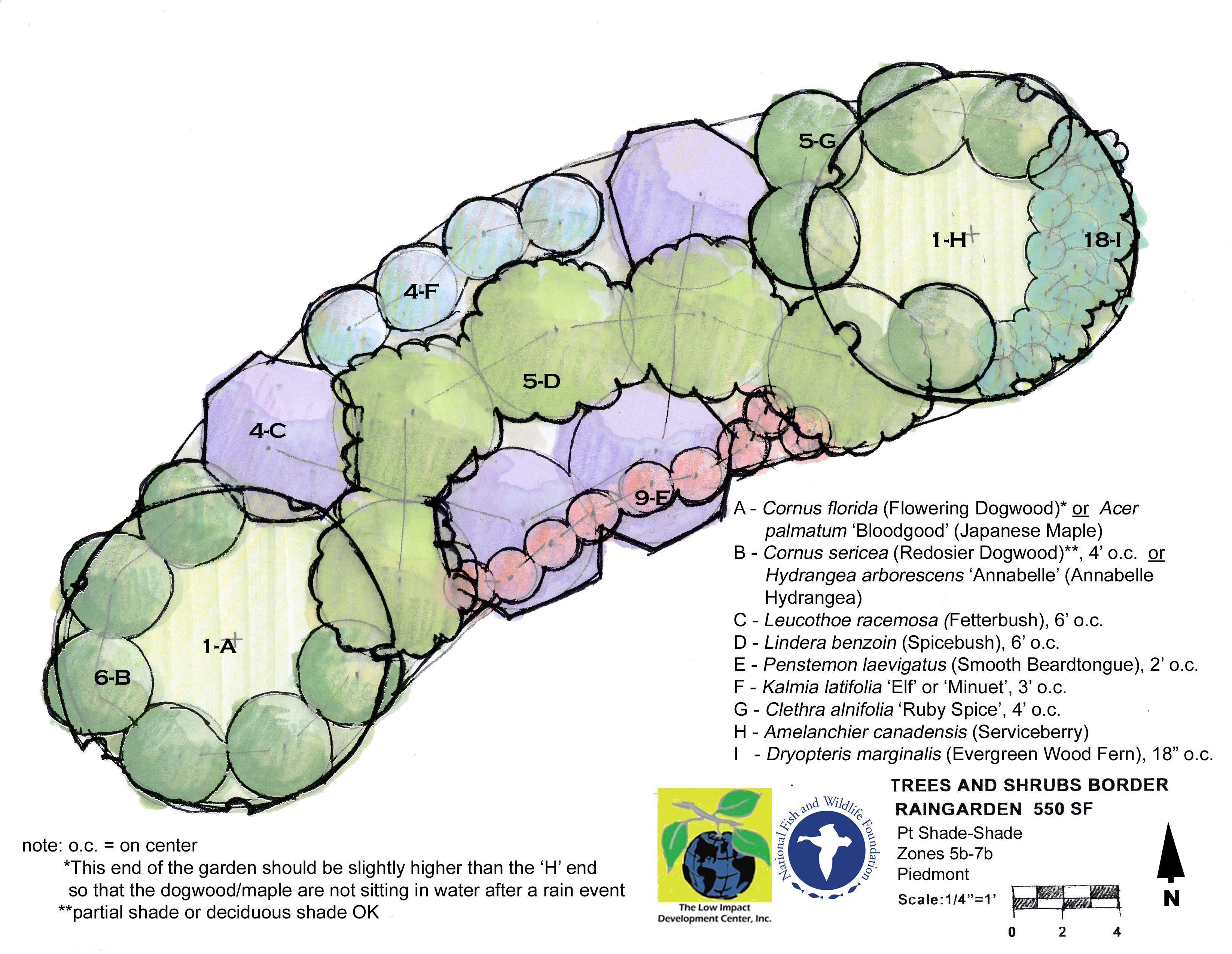 rain garden design and construction sustainable water management