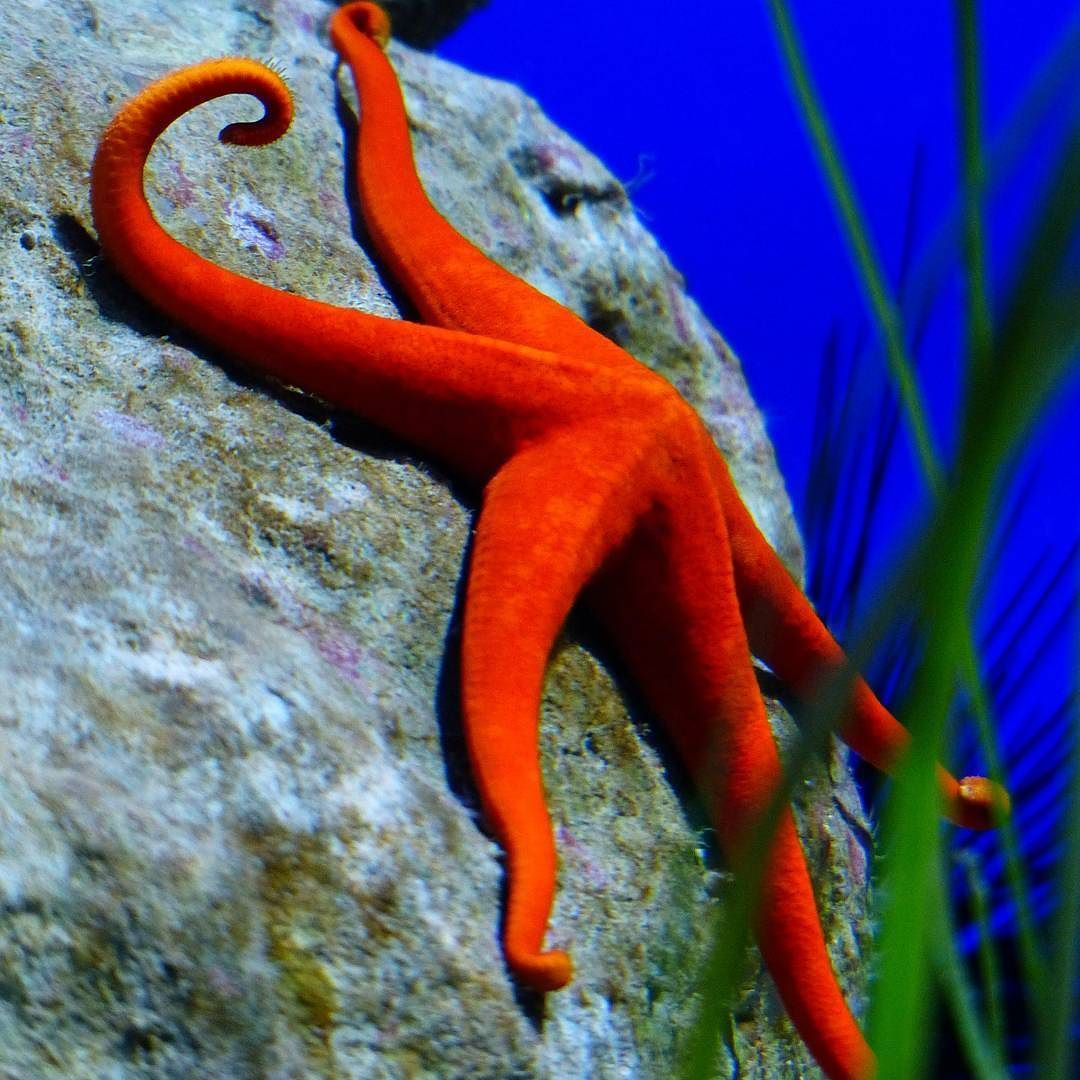 Fact: starfish have one eye on the tip of each arm and the can\'t see ...