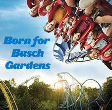 5085ce7dfd9dc1adda6ffc22b75d7d4f - Airport Closest To Busch Gardens Williamsburg