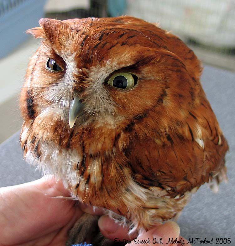 hungover owls!