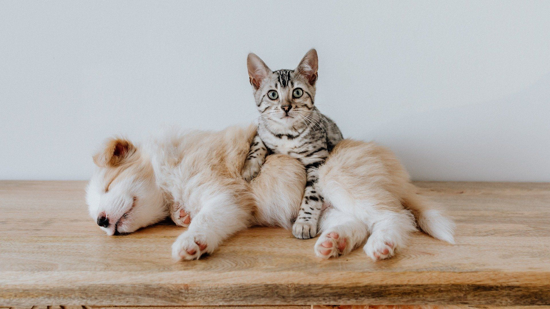 A Cute Baby And Cats Playing Together A Baby And A Cat Play Extremely Funny In 2020 Puppy Dog Images Free Puppies Puppy Images