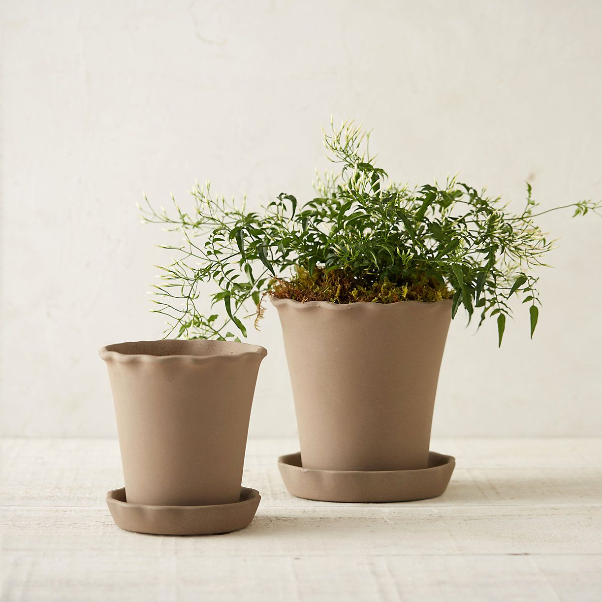 Ruffle Clay Pot & Saucer from Terrain