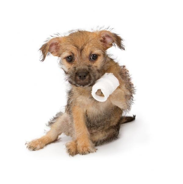 Resultado de imagen para perrito herido