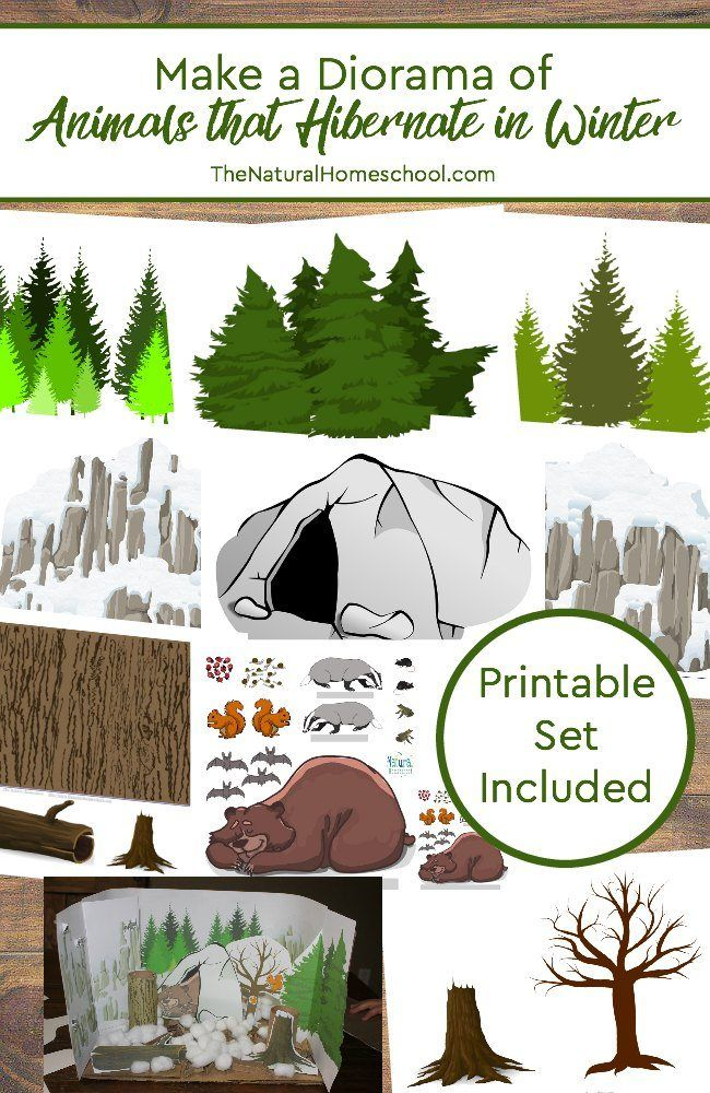 Make a Diorama of Animals that Hibernate in Winter