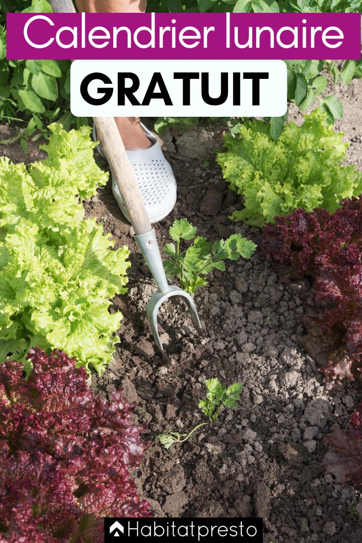 Jardiner Avec La Lune Septembre 2019 : jardiner, septembre, Comment, Jardiner, Calendrier, Lunaire, Lunaire,, Lune,, Potager