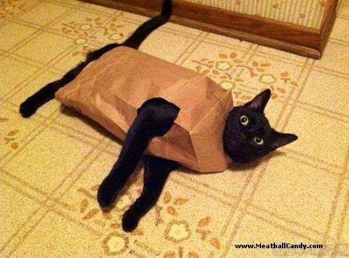 Cat in a bag.