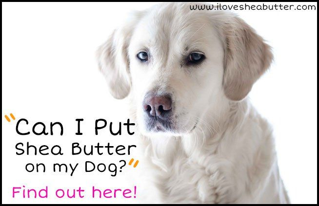 Can I Put Shea Butter On My Dog Autism Service Dogs Service Dogs