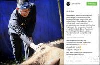 Yani Gajah Kebun Binatang Bandung