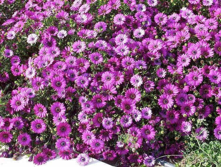 10 tipos de flores imagenes arbustos vivero y minerales for Tipos de viveros forestales