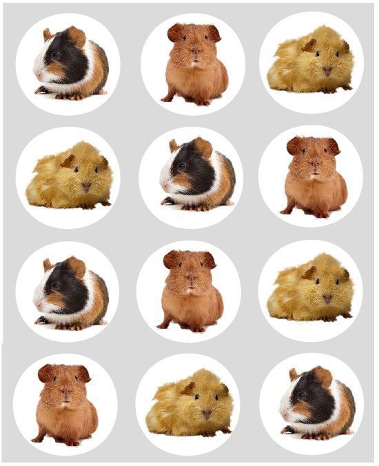 12 I Love Dogs Cupcake Decoration Edible Cake Toppers Pre Cut 40mm