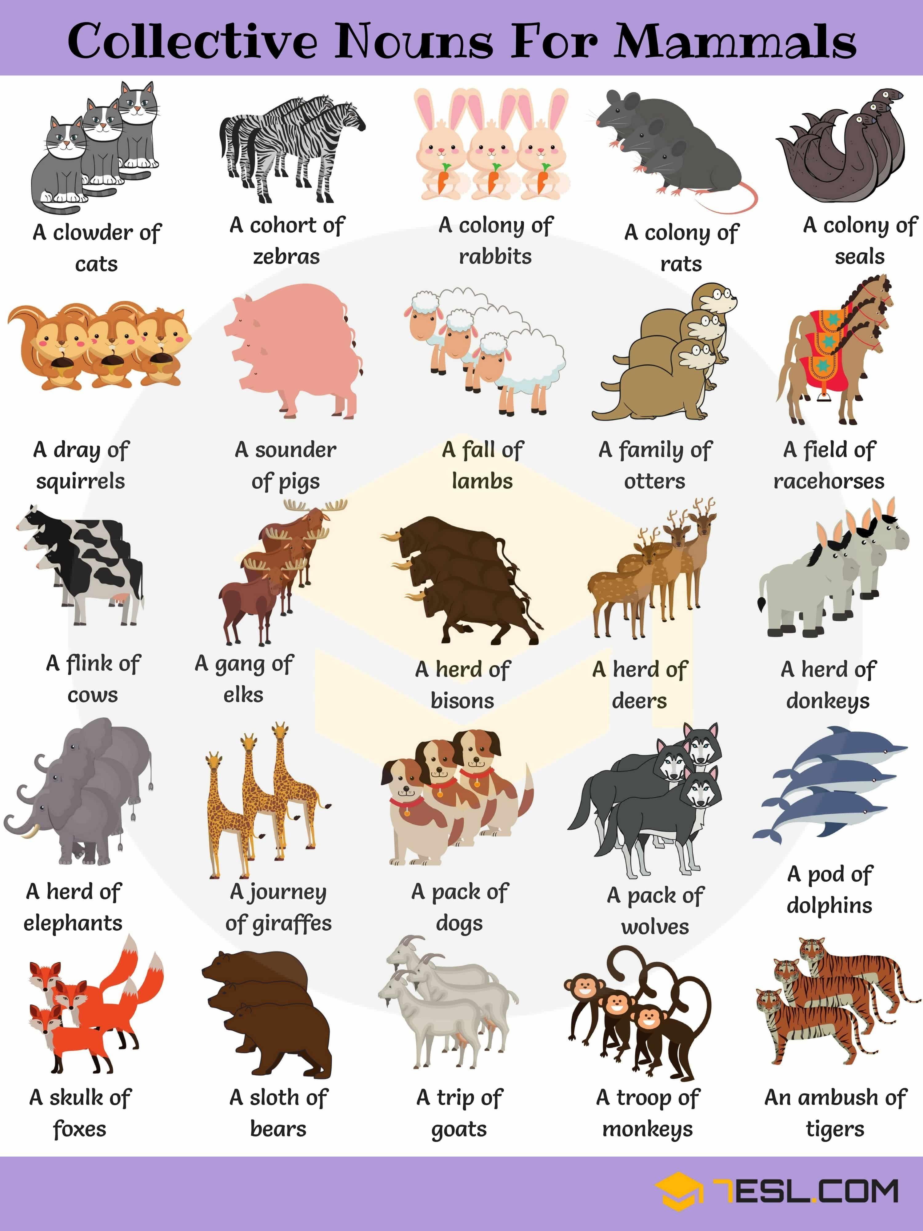 Animal Mammals Names