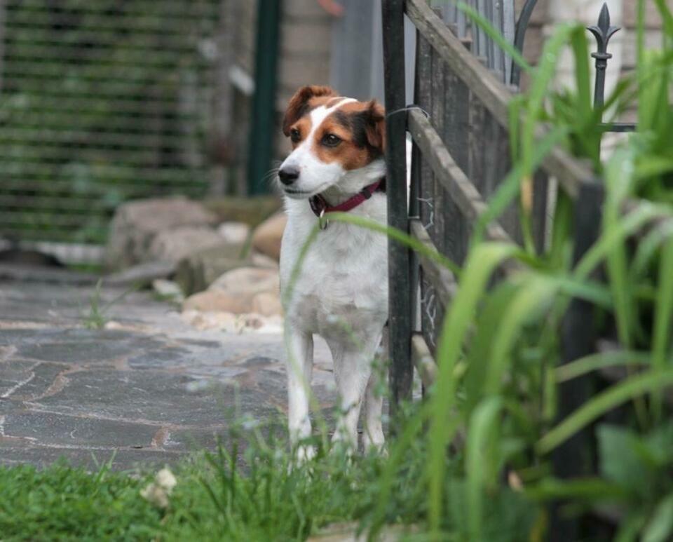 Kluge Lotti 3 Jahre Fox Terrier Mischling Hundin Hund Mix In Baden Wurttemberg Vaihingen An Der Enz Terrier Mischling Fox Terrier Terrier