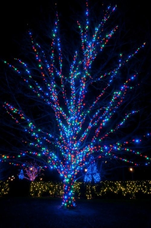 How To Wrap Lights Around Trees Gardening And Gardens Decorating