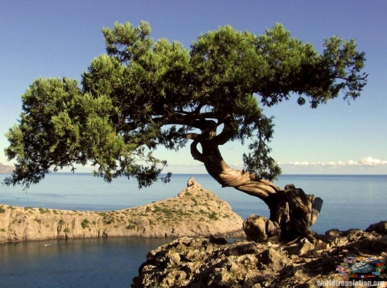 Juniper Tree Pictures Facts On Juniper Trees