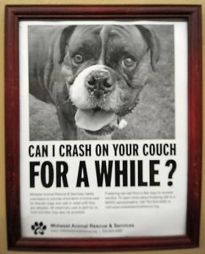 Great Animal Shelter Posters Google Search Animal Posters Funny Animals Pet Adoption