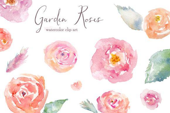 Garden Roses Watercolor Clip Art Watercolor Rose Watercolor Flowers Watercolor Clipart