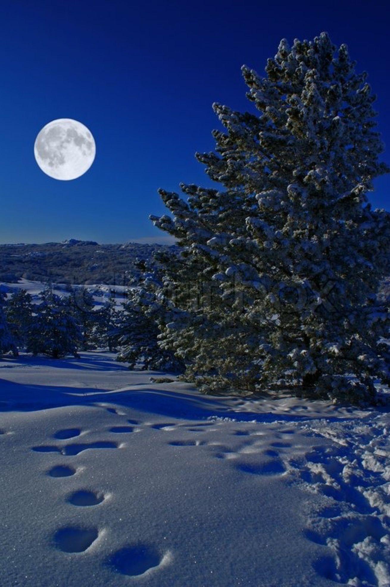 Perfect Moon Lit Winter Night Good Night Moon Moonlight Beautiful Moon