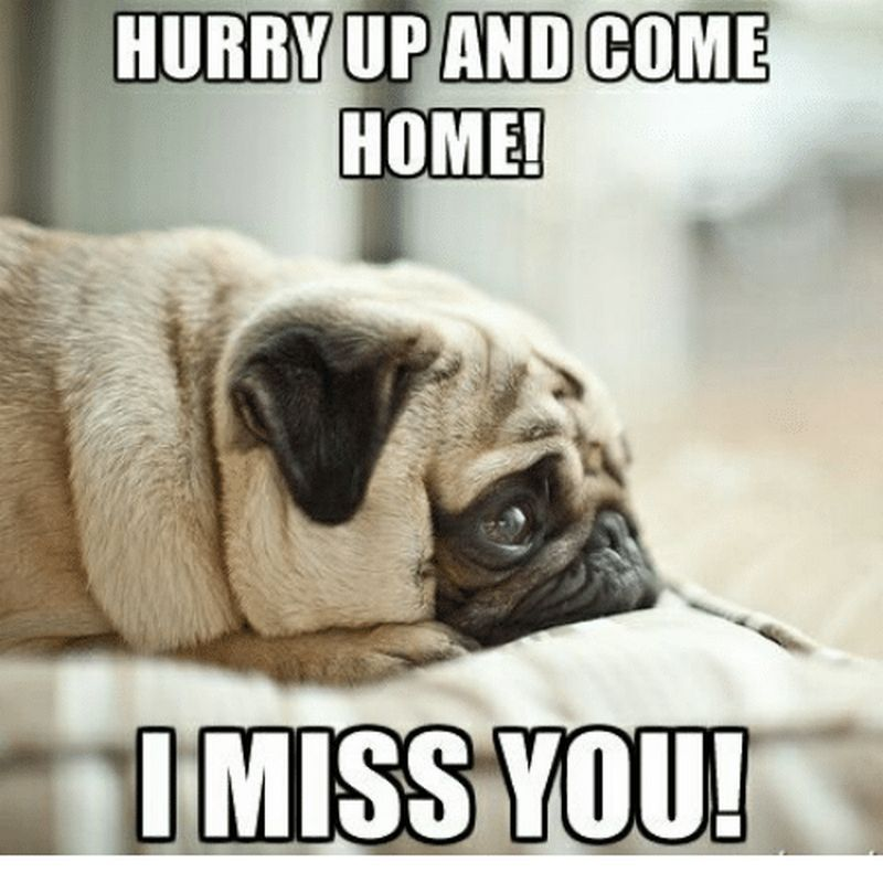 101 Sincere I Miss You Memes To Share With People You Love And Miss Love You Meme Missing You Memes Pug Memes